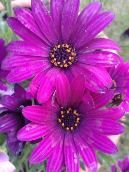 Fotos de preciosas flores