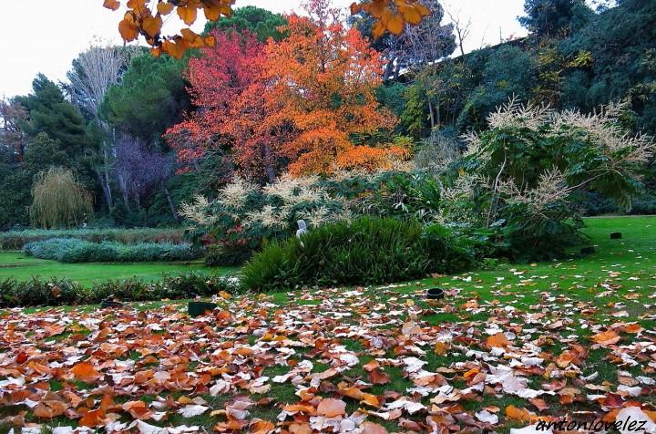 Fotos de jardines joan maragall en oto o for Jardines en otono